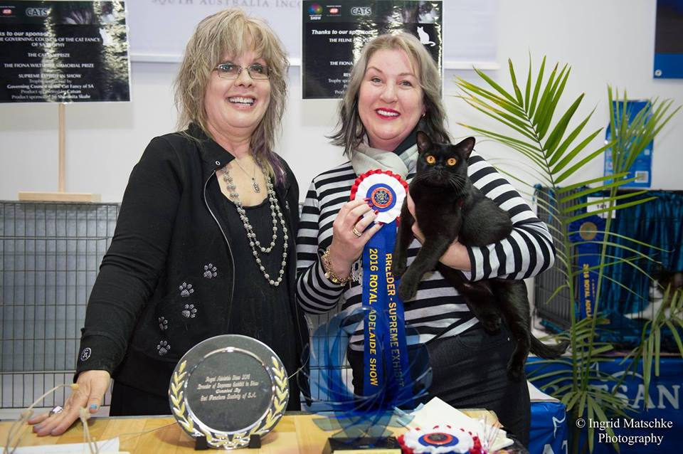 Blackglama Jewel Supreme Adelaide Royal