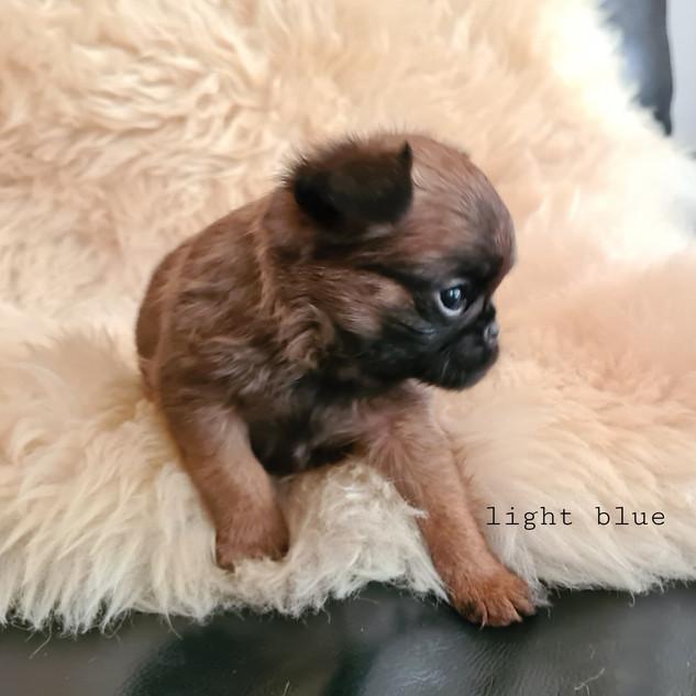Boy - Light Blue.jpg