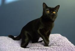 Miamber Little Black Dress