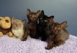 Xenas+X+Blitz+Kittens.jpg