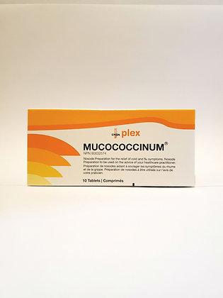 Muccococcinum