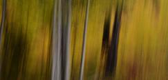 Forest Illusions-Autumn Rising
