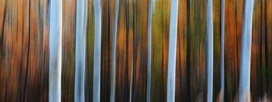 Forest Illusions- Autumn