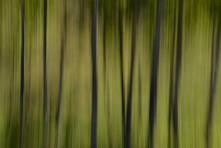 Forest Illusions- Born Again