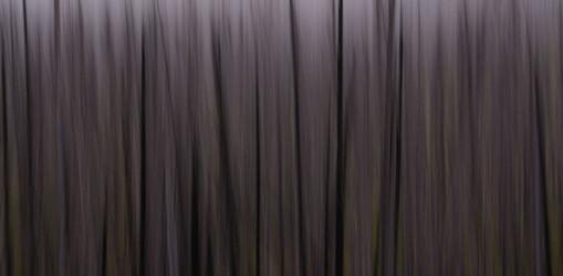 Forest Illusions- Darkwood