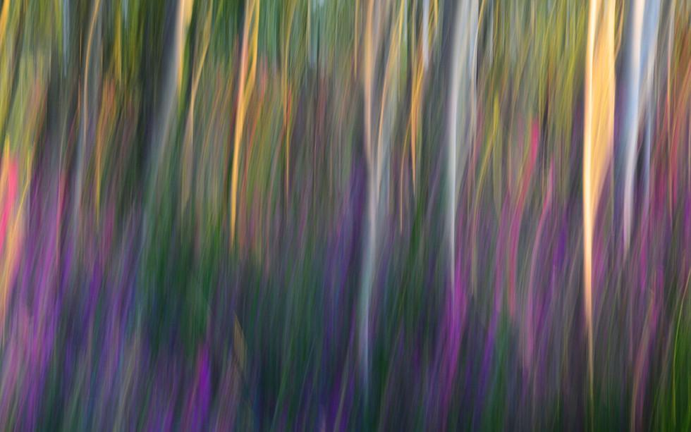 Forest Illusions- Fuchsia at Dawn