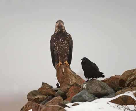 Eagle and the Raven