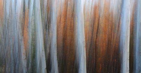 Forest Illusions- Autumn Illusions