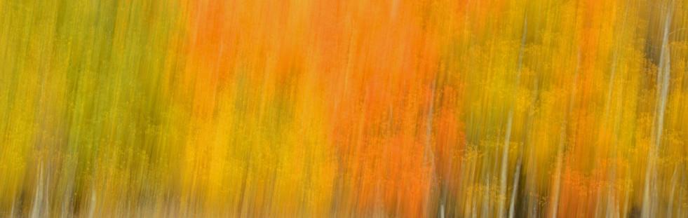 Forest Illusions- Splash of Autumn