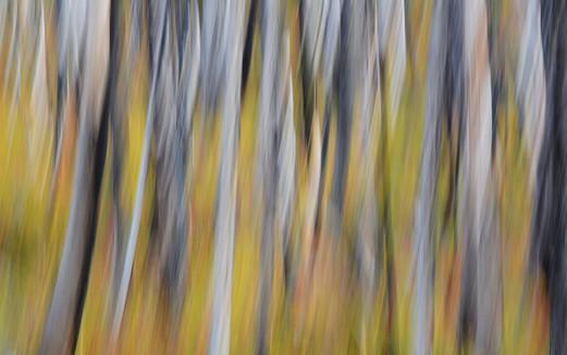 Tangled Autumn
