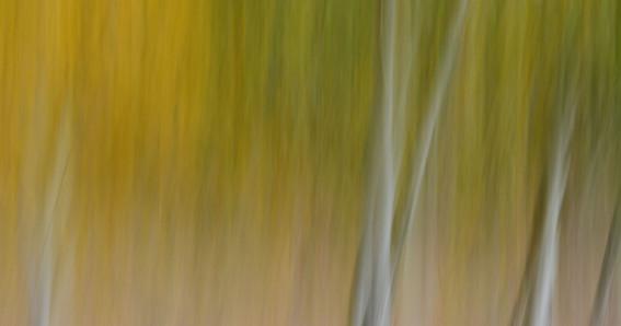 Forest Illusions- Autumn Dream