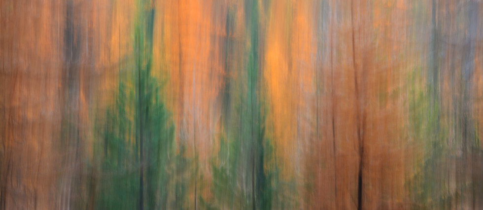 Forest Illusions-Autumn Born