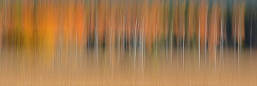 Forest Illusions- Autumn Abstracts 2