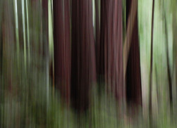 Abstract at Armstrong Redwoods
