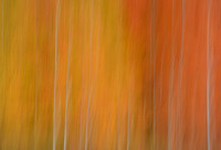 Autumn Polooza