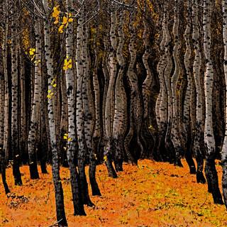 Fresco Forest