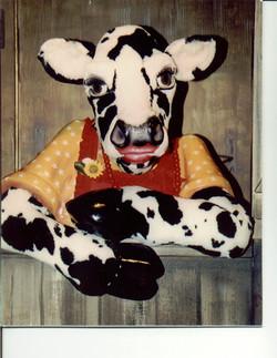 Anderson Cow