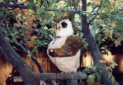 Winston Owl