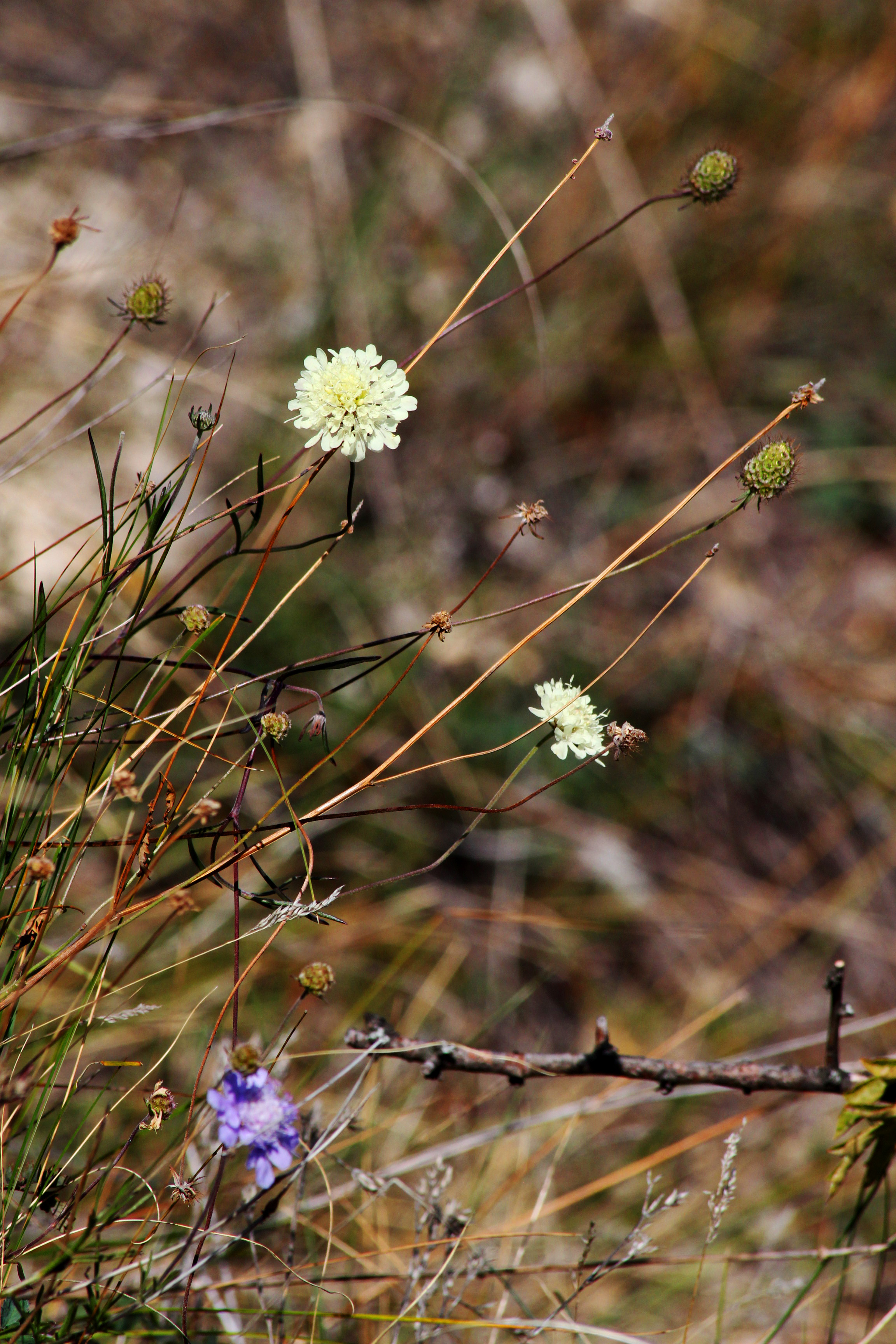 Sas-hegy Természetvédelmi Terület