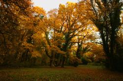 Vácrátóti Arborétum ősszel