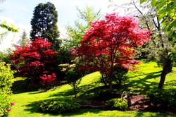 Japánkert az Állatkertben