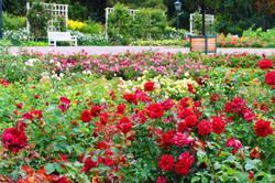 Ausztria legnagyobb rózsakertje - Baden bei Wien