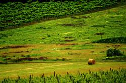 Tihanyi szőlőbirtok tetején