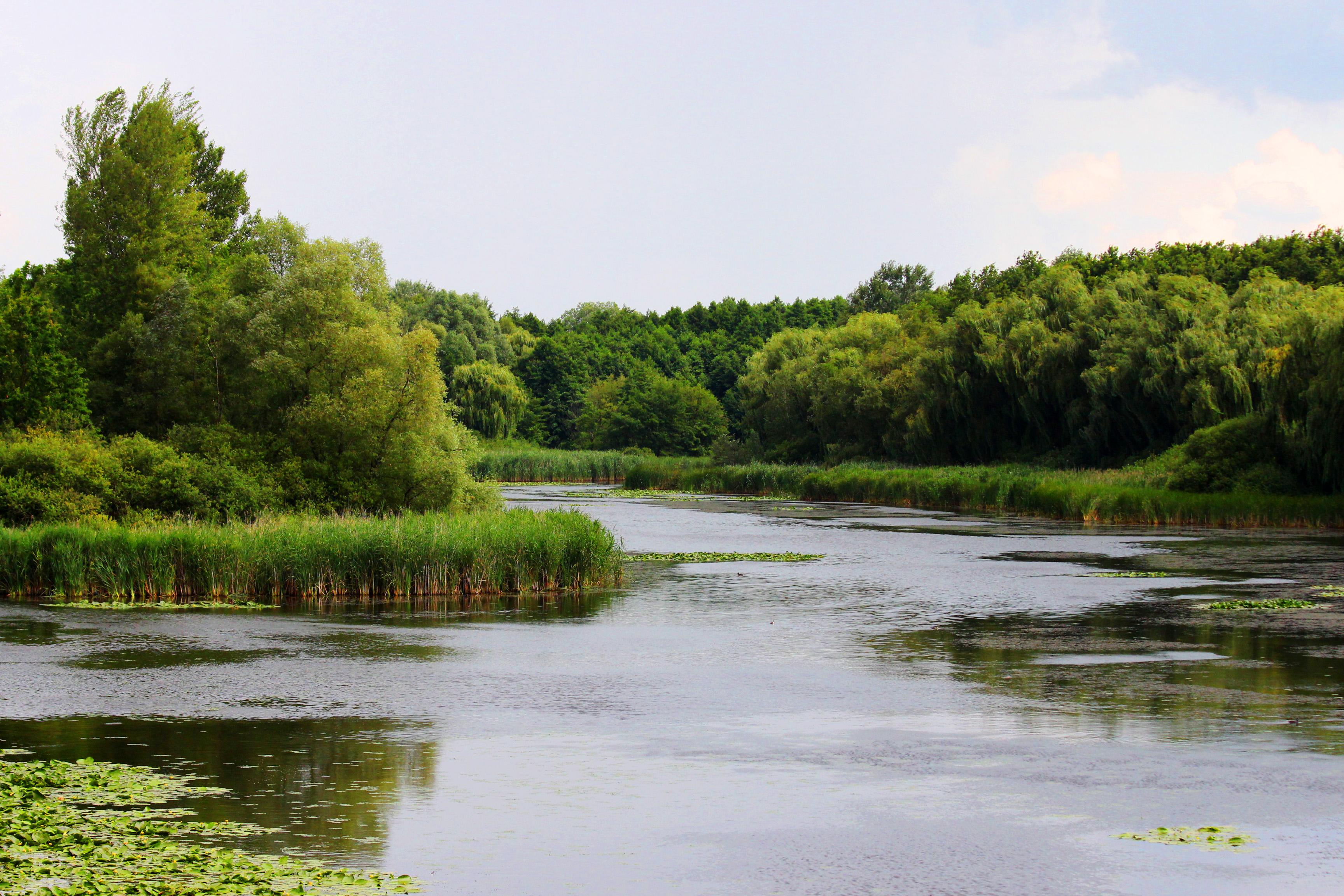 Kis-Balaton, Kányavári-sziget