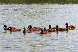 Szigetszentmiklósi úszóláp tanösvény