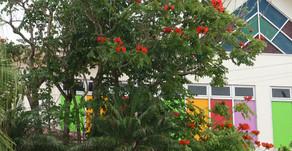 フルーツランドにそびえ立つ大きな木は、カエンボク。赤いお花が特徴的です。トロピカル王国物語のキャラクターの看板より目立ってしまうアフリカ原産の木です。沖縄で見かけるのも珍しいのかな。花言葉は名声です。