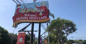 名護に入り84号線を進んでいくと沖縄フルーツランドの看板が目につきます。王様を始めトロピカル王国物語という絵本の世界のキャラクター達がお出迎えです。晴れた日も雨の日も皆様を元気よく迎えてくれます。