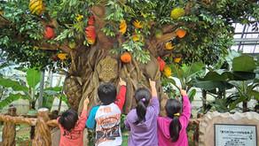 沖縄フルーツランドは絵本の世界を冒険するテーマパークです。その名は「トロピカル王国物語」。妖精にさらわれた王様を助け出す為にフルーツ魔法を覚えたり秘密を解いたり、皆様の力を合わせご体験下さい。