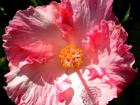 リエッタ中山は、海や山や街に囲まれた沖縄県の北部の名護市にございます。沖縄のお花といえばハイビスカス。自然豊かの中でゆっくりゆったりのご宿泊がオススメです。コンドミニアムホテルなのでご家族で過ごせます