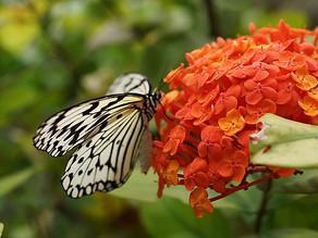 6月水無月の季節、本日はローズの日という事ですが、沖縄では有名なサンダンカをご紹介です。リエッタ中山にも植栽されており赤いお花は元気にさせてくれます。カップルから子連れのご家族まで広々空間のホテルです