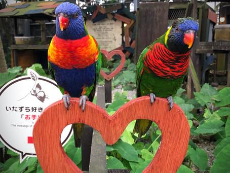 コンドミニアムホテルナゴリゾートリエッタ中山から聞こえてくる鳥のさえずり、実はBGMではありません。フルーツランドのインコ達なのです。大自然と鳥の鳴き声で海外にいるようですね。名護旅館沖縄飯店宿泊