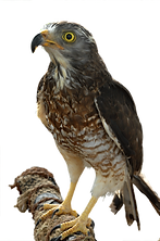 フルーツランド鳥5.png