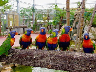 フルーツランド鳥15.jpg