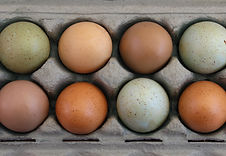 Over head view of colorful farm fresh eggs in carton.jpg