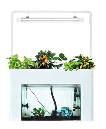 Aquasprouts Kit with Lamp