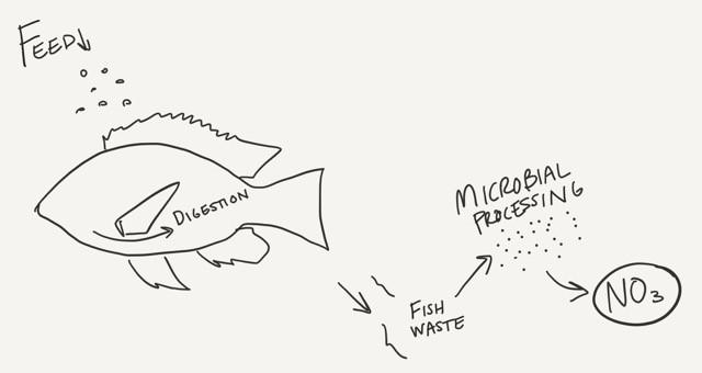Nitrogen process aquaponics