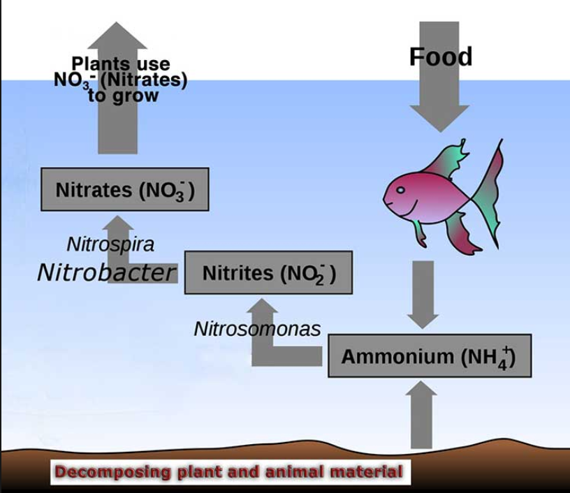 Nitrates in Aquaponics