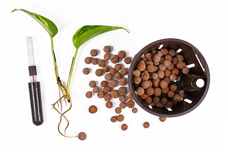 Growing plants Clay Balls.jpg
