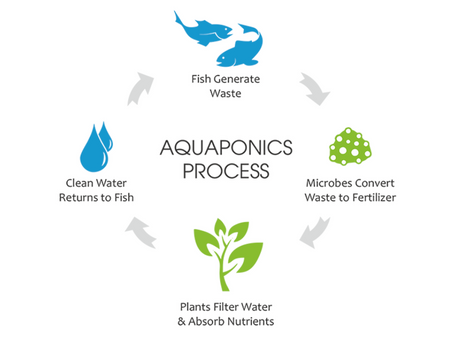 AQUAPONICS: THE MOST COMPELLING REASON?