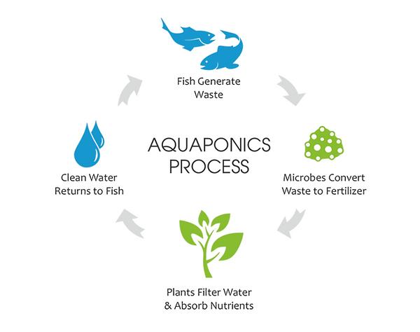 Aquaponic process Australia