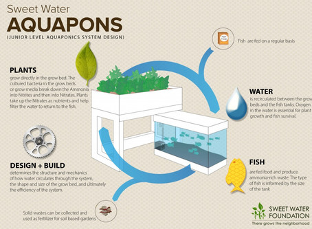 Aquaponics: The Cost-Effective, Cyclical Way to Raise Fish and Grow Plants at the Same Time!
