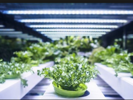 What is hydroponics - is it the future of farming?