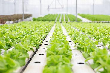Privacy Policy Urban Green Farms