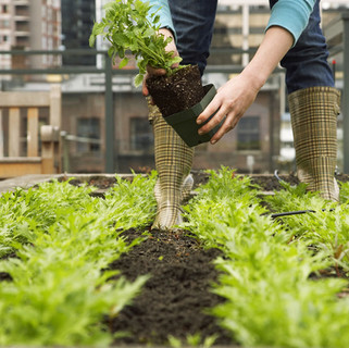 About Us. Grow food with Urban Green Farms