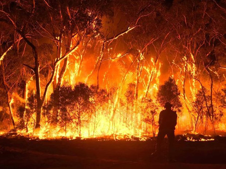 Bushfires: The effects on the environment.