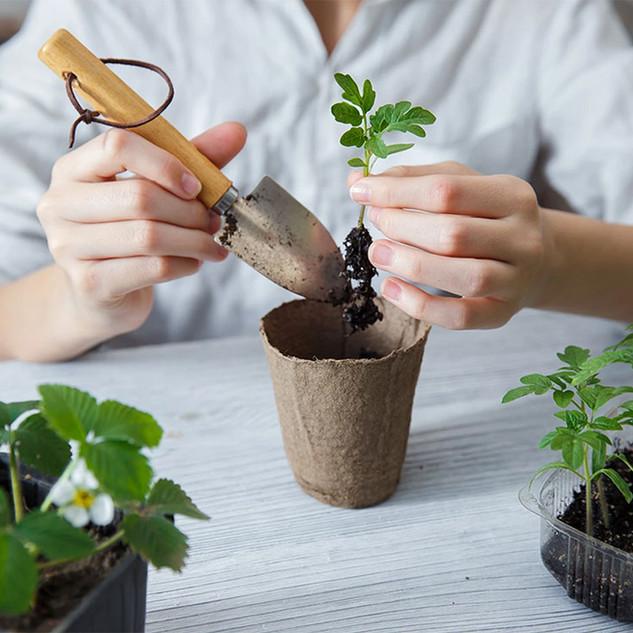 Growing-food.jpg